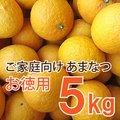 伊藤農園  【訳あり】  お徳用 あまなつ  5kg