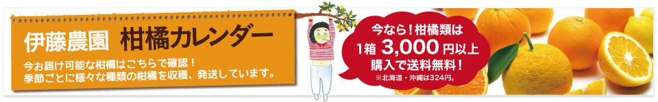 旬柑橘カレンダー