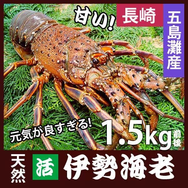 長崎産天然活伊勢海老 超特大...