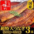 超特大うなぎ蒲焼き 200g-229g×3本セット【送料無料】【ウナギ 鰻 国産 贈り物】