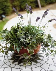 造花のグリーンアート 光触媒/造花 観葉植物 グリーン