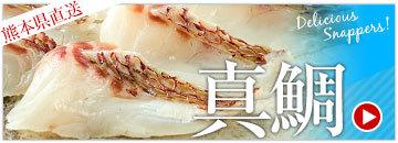 熊本県直送 真鯛
