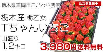 Tちゃん1.2キロ