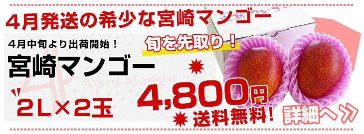 4月宮崎マンゴー