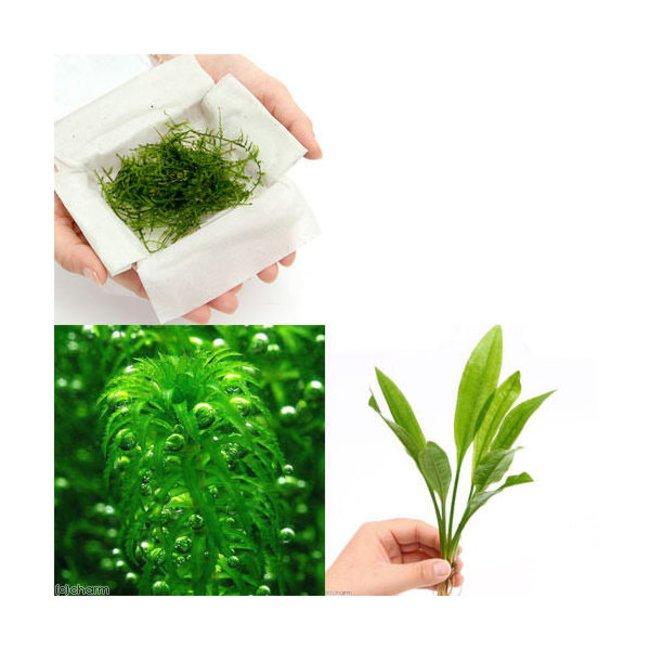 農薬 水草