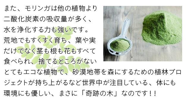 モリンガは生命力、浄化力がとても強く、捨てるところがないエコな植物です