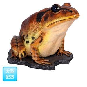 高価値 FRP 巨大な縞足ガエル/ Great Barred Barred/ Frog 『カエルオブジェ アニマルオブジェ 店舗・イベント向け』 送料無料 【FRP】巨大な縞足ガエル。, 信濃屋:5a5f39ee --- move-you.com