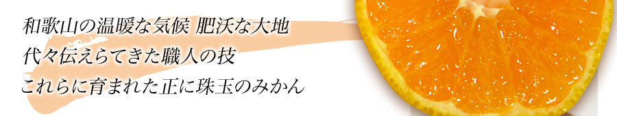 和歌山の温暖な気候 肥沃な大地 代々伝えられてきた職人の技 こららに育まれた正に珠玉のみかん