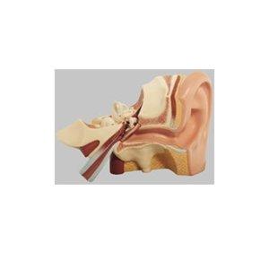 大きな取引 【送料無料】 耳解剖模型 1.2kg DS3 高さ21×幅32×奥行19cm 1.2kg DS3 耳解剖模型 ソムソ ソムソ社製の人体模型。約3倍大。3分解可能, 遠藤食品:c3ca13d2 --- rise-of-the-knights.de