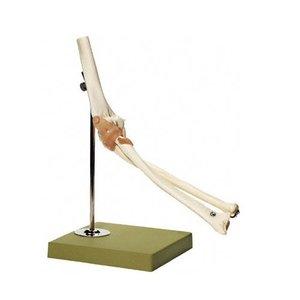 大注目 【送料無料 650g】 模型Human 模型Human Model 肘関節機能模型 肘関節機能模型 41×19×22cm 650g ソムソ 医療器と健康ショップ「元気爽快」のおすすめアイテム, 猫ときんとき:97189c5d --- ccnma.org