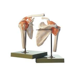 上品 【送料無料】 模型Human Model 肩関節機能模型 26×19×22cm 650g ソムソ, 西置賜郡 caed9d01