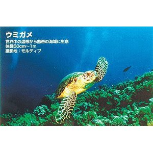 カウくる <Too>バックライトフィルム 432mmx30m FP-M (表打ちタイプ)// 432mmx30m FP-M IJR17-51PD(き), glass liebe:c741ec40 --- fukuoka-heisei.gr.jp