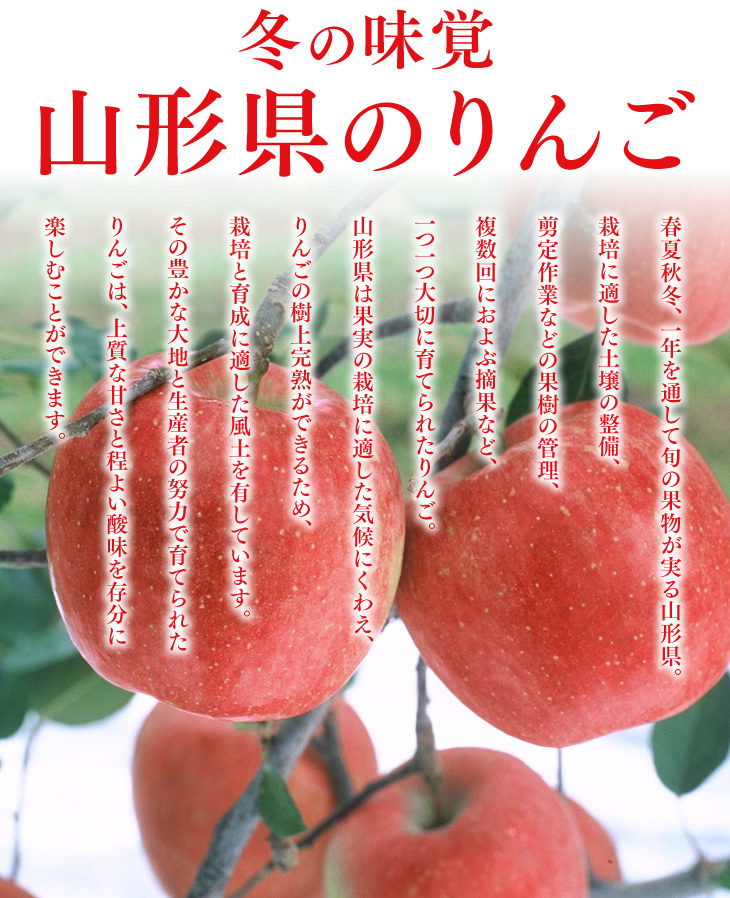 冬の味覚山形県のりんご | 春夏秋冬、一年を通して旬の果物が実る山形県。栽培に適した土壌の整備、剪定作業などの果樹の管理、複数回におよぶ摘果など、一つ一つ大切に育てられたりんご。山形県は果実の栽培に適した気候に加え、りんごの樹上完熟ができるため、栽培と育成に適した風土を有しています。その豊かな大地と生産者の努力で育てられたりんごは、上質な甘さと程よい酸味を存分に楽しむことができます。