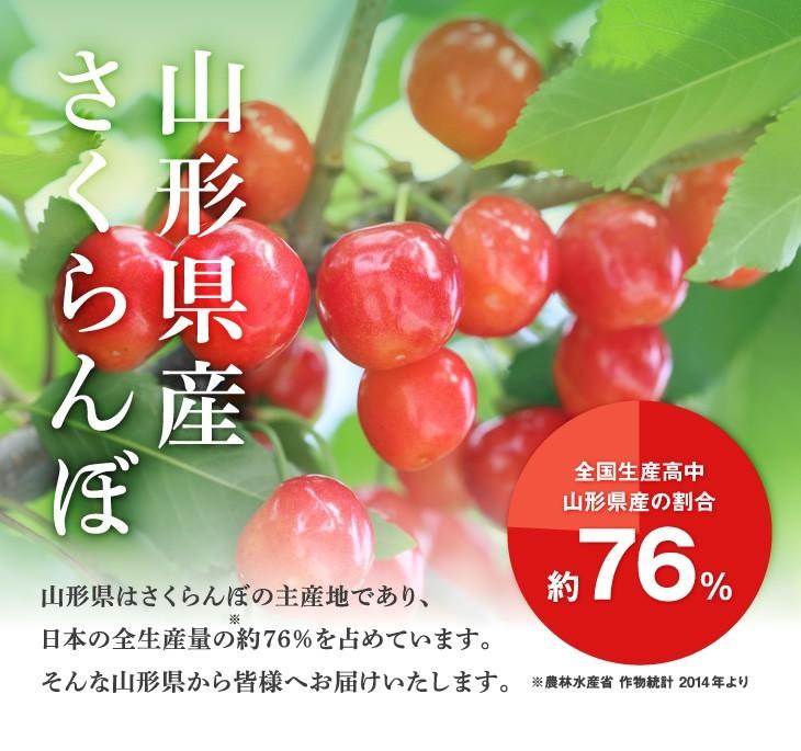 日本一!山形のさくらんぼ | 美味しいさくらんぼの秘密