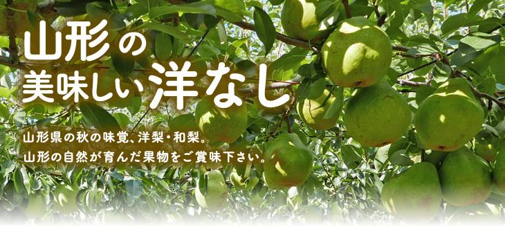 山形の育ちの美味しい洋なし | 秋フルーツの味覚代表!!