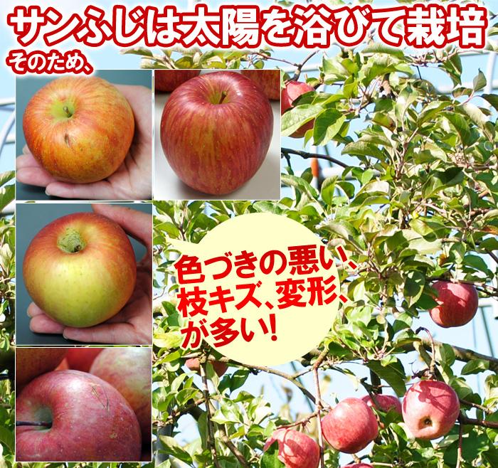 そのため規格外のような訳あり林檎が出ます