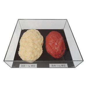 【限定特価】 【キャッシュレス5%還元】【送料無料】脂肪/筋肉対比セット(アクリルケース入)1kg IP-982【生活雑貨館】, 和装専門店 久保商店:84960a5f --- ff-klempau.de