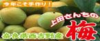 上田さんちの梅