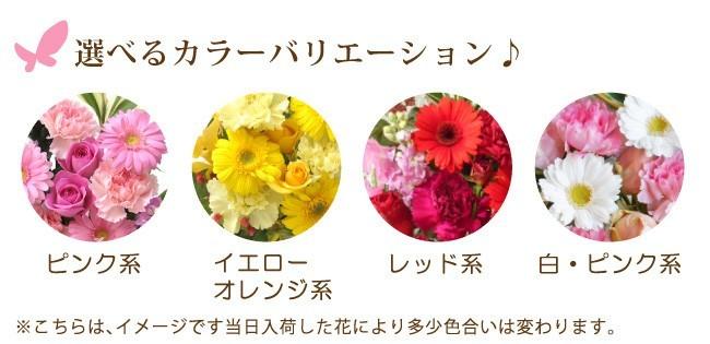 3300旬花
