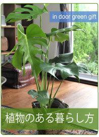 植物のある暮らし方