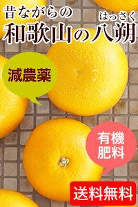 減農薬、有機肥料栽培の昔ながらの和歌山のハッサク。ご予約開始!