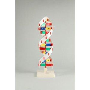 超美品 DNAモデル B 8983 B DNAモデル DNAモデル B 8983, パワーストーン 天然石 LuLu House:f4246499 --- gardareview.ie