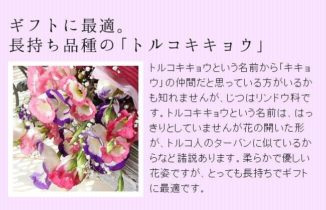 暑い夏の花贈りに。長持ち品種の「トルコキキョウ」をお届け!トルコキキョウという名前から「キキョウ」の仲間だと思っている方がいるかも知れませんが、じつはリンドウ科です。トルコ~という名前は、はっきりとしていませんが花の開いた形が、トルコ人のターバンに似ているからなど諸説あります。柔らかで優しい花姿ですが、とっても長持ちで暑い夏のギフトに最適です。