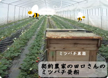 ミツバチ巣箱