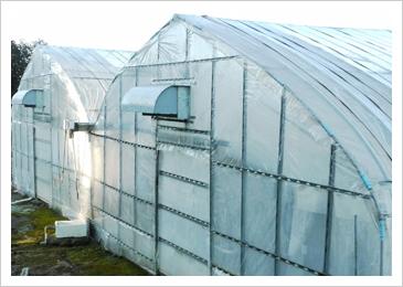 2重構造になっていて、冬でも暖かく日中は苺を作るのに適した