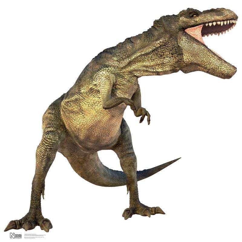 恐竜 段ボール パネル カードボード おもちゃ 部屋 飾り アカムス