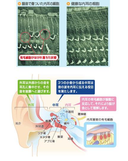 耳の仕組み 耳栓 イヤーマフ 騒音