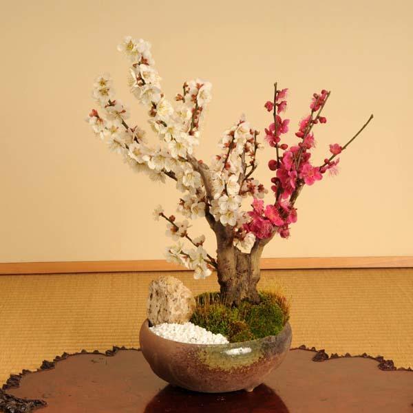 盆栽:紅白梅(瀬戸焼三彩鉢)