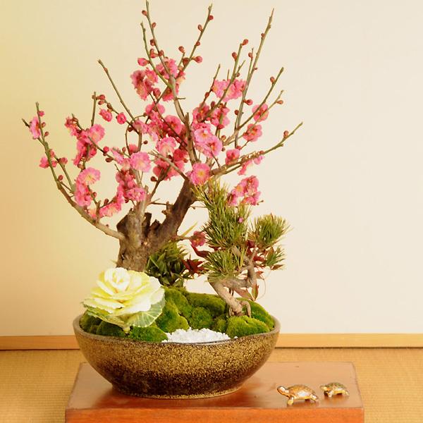 迎春:松竹梅(信楽焼鉢)