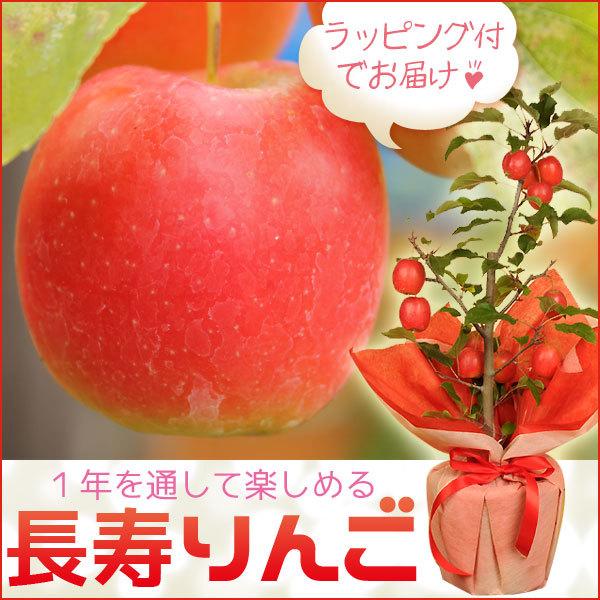 盆栽:長寿りんご*(ラッピング付)