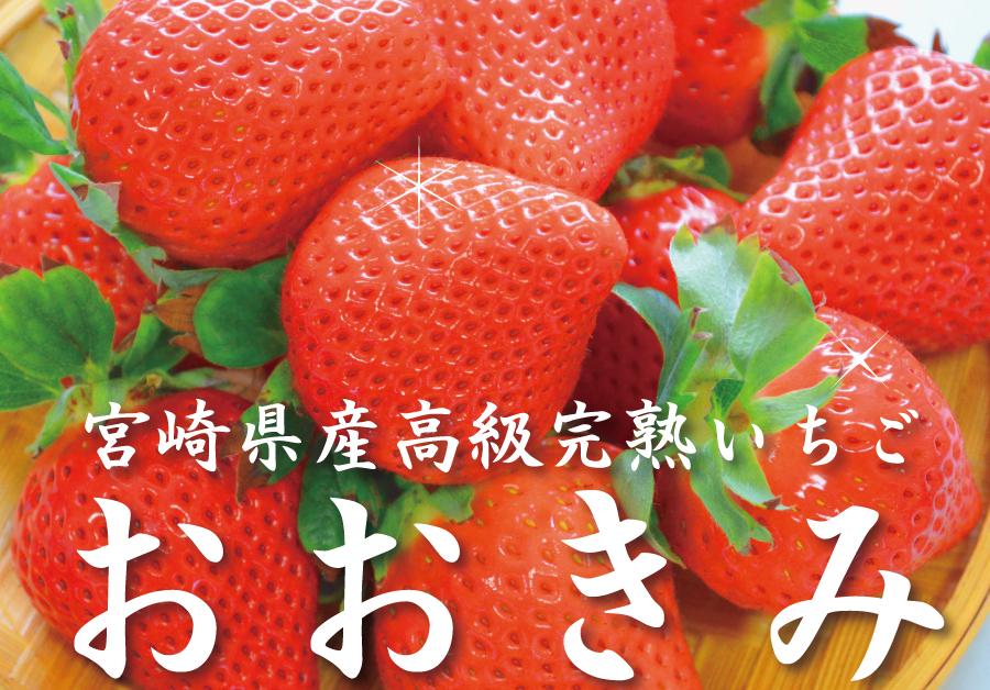宮崎産高級いちご「おおきみ」