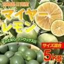 マイヤーレモン 5kg 送料無料